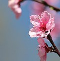 Pastel Spring by Christy Berry