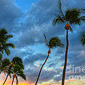 Pastel Tropical Sunrise by Kelly Wade