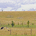 Pastoral by Keith Armstrong