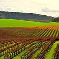 Pastoral Vineyards Of Asti by Antonia Citrino