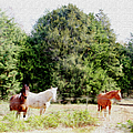 Pasture For Three by Ericamaxine Price