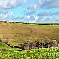 Pasture Land - Dorset by Susie Peek