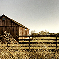 Pasture by Margie Hurwich