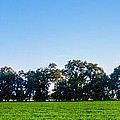 Pasture Tree Line Summer 15798 by Jerry Sodorff