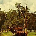 Pastureland by IM Spadecaller