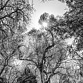 Patagonia Bw 4 by Larry White