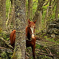 Patagonian Packhorse by Bruce J Robinson