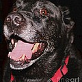 Patchwork Black Lab Closeup by Barbara Griffin
