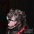 Patchwork Black Lab Smiling by Barbara Griffin
