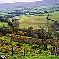 Patchwork Fields Northern Ireland by Thomas R Fletcher