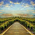 Path 3 by Ben Yassa