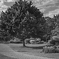 Path At Michigan State University Garden  by John McGraw