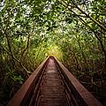 Path by Carl Engman