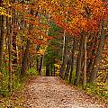 Path In A Fall Woods by Kenneth Sponsler