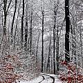 Path In A Forest In Winter In The Countryside  In Denmark by Jean Schweitzer
