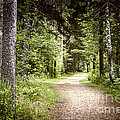 Path In Green Forest by Elena Elisseeva