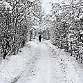 Path In The Snow In Winter In Denmark by Jean Schweitzer