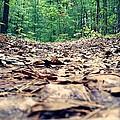 Path by Luna Allen
