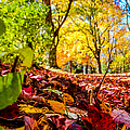 Path Of Leaves by Charlene Gauld