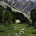 Path Of Life Ruby Mountains Stock Trail by Karen  W Meyer