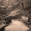 Path Over Historic Poinsett Bridge  by Kelly Hazel