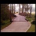 Path by Scott Pellegrin