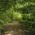 Path by Svetlana Sewell