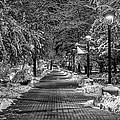Path Through Eastern by Mark Kiver
