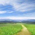 Path Through Field Leading To Distant by Ryan Etter