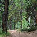 Path Through The Pines - Casper Mountain - Casper Wyoming by Diane Mintle