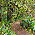 Path Through The Rainforest by Louise Heusinkveld
