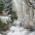 Path Through The Snow by Ann Garrett