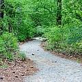Path Through The Woods by Cynthia Guinn