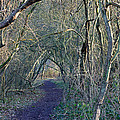 Path Through The Woods by Tony Murtagh