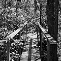 Path To  by Joseph Perno