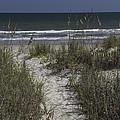 Path To The Beach by Teresa Mucha