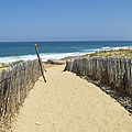 Path To The Sea by Pixabay
