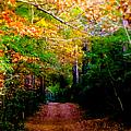 Paths We Choose by Karen Wiles