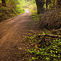 Pathway In The Woods by Carlos Caetano