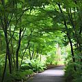 Pathway by Joyce Baldassarre