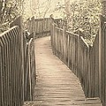 Pathway by Melissa Petrey