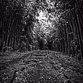 Pathway Through A Bamboo Forest Maui Hawaii by Edward Fielding