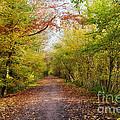 Pathway Through Sunlit Autumn Woodland Trees by Natalie Kinnear