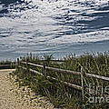 Pathway To The Sea by Tom Gari Gallery-Three-Photography