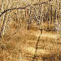Pathways by Stephanie  Bland