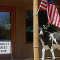 Patriotic Cow Cave Creek Arizona 2004 by David Lee Guss