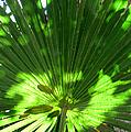 Green Plant Pattern by Bob Slitzan