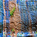 Pattern On Wet Canyon Wall From River Walk In Zion Canyon In Zion National Park-utah  by Ruth Hager