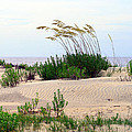 Patterned Dune With Oats by Barbara Northrup