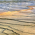 Patterns At Yellowstone #1 by Sharon M Connolly